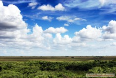 Everglades Prairie Sky